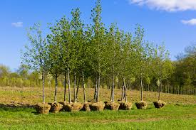 why fall is the best time to plant trees in lawn management