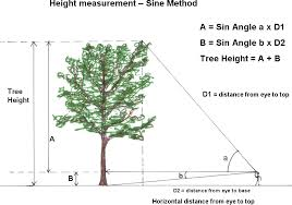 For A Tree Exactly Measuring Tree Height