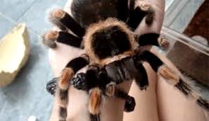 25 freaky spider gifs to make your skin crawl