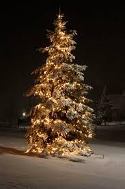 Botanical Gardens Atlanta Christmas Lights by 87 Best Christmas Lights Images On Pinterest Christmas Lights