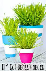 diy indoor cat grass garden typically simple