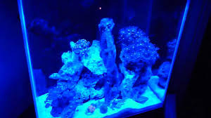 Fluval Sea Marine And Reef Led Strip Lights by Fluval Edge 12 Gal Tank Beginner U0027s Nano Reef Youtube
