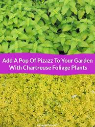 garden foliage plants foliage plantspurple leaves color in the