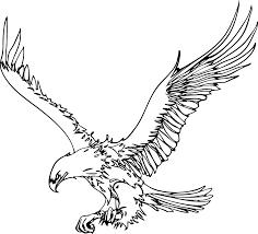 golden eagle clipart outline pencil and in color golden eagle