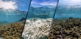 Coral Reefs Of The World Map by As Coral Bleaching Goes Global Scientists Fear Worst Is Yet To