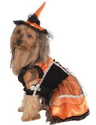 Halloween Costumes Miniature Dachshunds 25 Small Dog Halloween Costumes Ideas Small