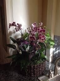 Indoor Plant Arrangements Spotted Freckled Orchid Flower Arrangement Indoor Plants In Wicker