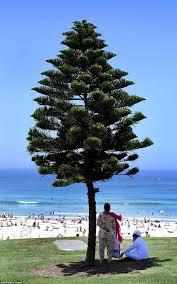 bureau de change sydney sydney heatwave continues as temperatures hit 47c daily mail