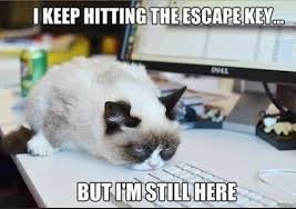 No Meme Grumpy Cat - 10 of grumpy cat s best hilarious memes i can has cheezburger