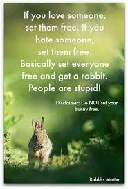 Silly Rabbit Meme - bunny stays bunnies ch xxv pinterest pet pet bunny and rabbit