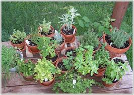 Potted Herb Garden Ideas Quality Soil Potted Herb Garden Ideas 747 Hostelgarden Net
