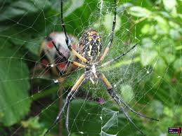 riverbanks botanical garden writing spider mysterious and misplaced logic of a maniac gone awry