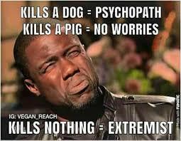 Vegan Meme - vegan shizzle