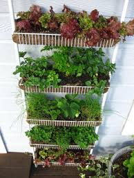 Container Gardening Ideas Container Gardening Ideas Reuse Spice Rack As A Container Garden