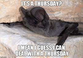Funny Thursday Meme - 27 most funny bat meme pictures of all the time