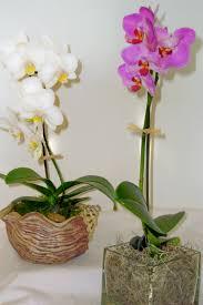 Orchid Plants Flowers Orchids Plants Ucla Health