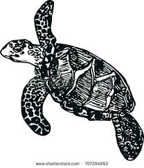 sea turtle on white background sketch stock vector 707294953