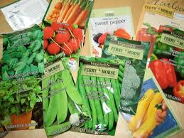 cheap seed packets from a worcester allotment how to collect seeds