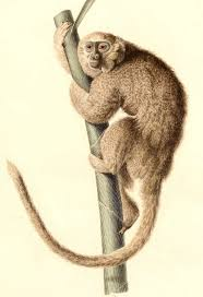 fossil evidence suggests humans played a role in monkey u0027s demise