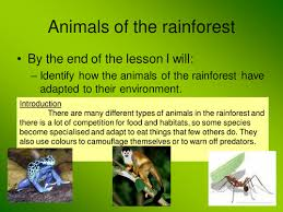Adaptations Of Tropical Rainforest Plants - rainforest by claire494 teaching resources tes