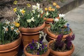 bulbs stock photos images plant u0026 flower stock photography