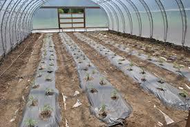unheated greenhouse mehaffey farm blog