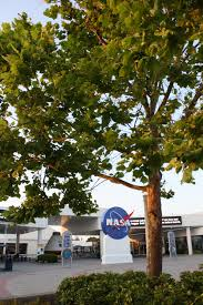 nasa what on earth are moon trees