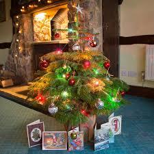nordman fir christmas tree gift send a pot grown nordman fir