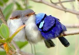 birds on a branch birds on branch mymatchatea co