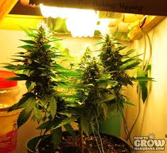 250 watt hps grow light marijuana grow lights led hps cfl