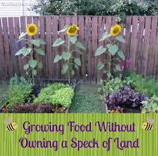 Container Gardening For Food - growing food without owning a speck of land northern homestead