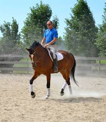 ferrari horse all horses listed by meadow brook farm at warmblood sales com