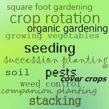 crop rotation succession planting for disease control