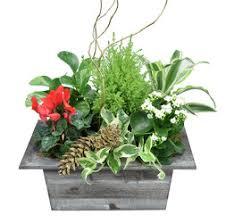 dallas florist dallas floirst christmas flowers plants dallas florist