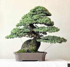 masterpieces of kyoshin special trees of artists own