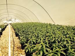 texas native plants nursery mega grower color spot nursery to consider growing clean chemical