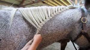 hairstyles for horses how to braid a horse s mane youtube