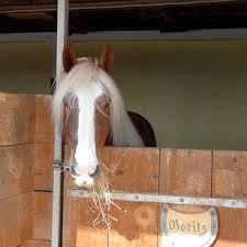 pferdestall pferdebox und reitplatz selber bauen