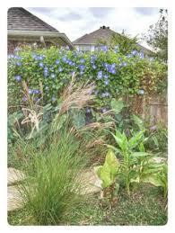 Backyard Fort Worth - https flic kr p frzt49 water garden pond stock flowers orange