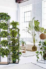 plants and plant stands as room dividers studio pinterest
