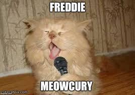 cat singing memes imgflip