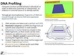 topic 3 genetics monique lowes u0027 ib blog