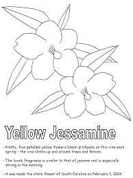 yellow jessamine coloring pages