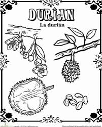 durian in spanish worksheet education com