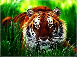 animal wallpaper hd desktop group 90