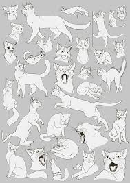 25 cat pose ideas cat anatomy lazy cat