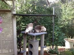 cat patio build your own u201ccatio u201d