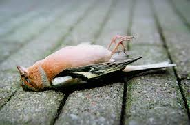 world u0027s top serial bird killers put infamous windmills to shame