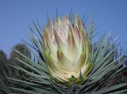 arizona flowers flowers bloom in the desert arizona destinations