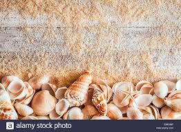 assorted seashells border of assorted seashells including a cone bivalves conch and